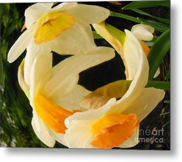 Ring Around The Rosie Metal Print by Sharon Costa