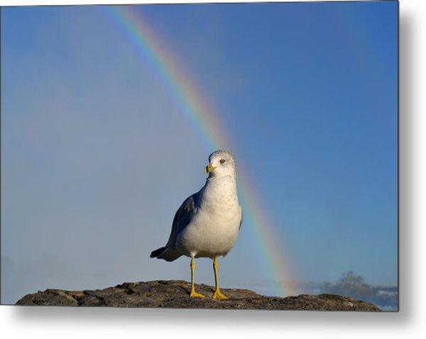 Ring Billed Seagull At Niagara Falls Metal Print