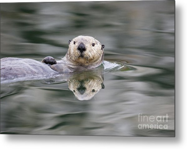 Ripples And Reflections Metal Print by Tim Grams