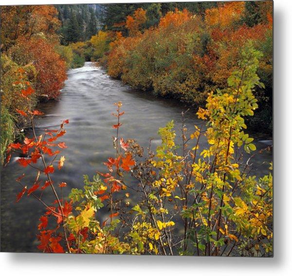 River Color Metal Print by Leland D Howard