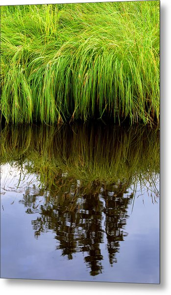 Riverbank Wild Grass Metal Print