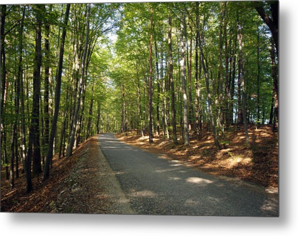 Road In Forest  Metal Print by Ioan Panaite
