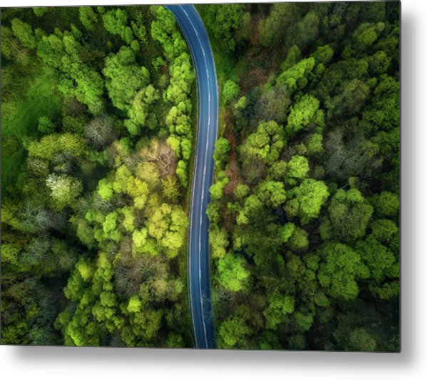 Road In The Forest Metal Print