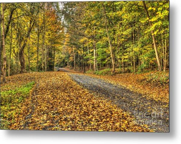 Road Into Woods Metal Print