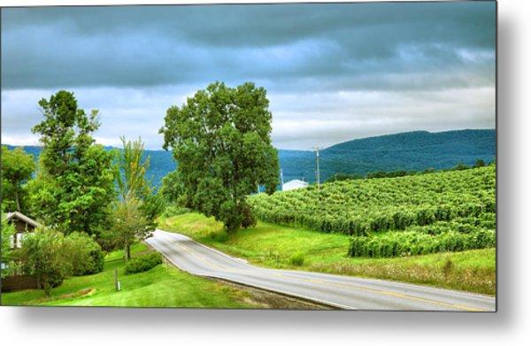 Roadside Vineyard Metal Print