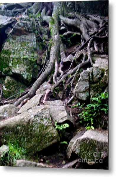 Roaming Tree Roots Metal Print
