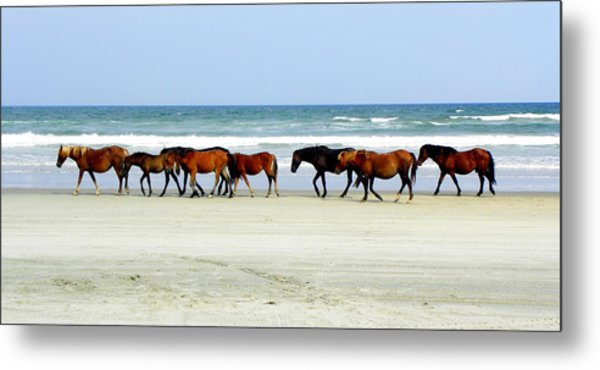 Roaming Wild And Free Metal Print by Kim Galluzzo Wozniak