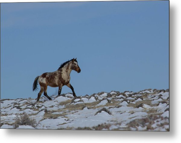 Roan In Snow Metal Print