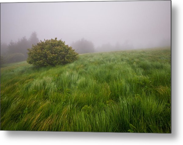 Roan Mountain Appalachian Trail Landscape Photography Windswept Metal Print