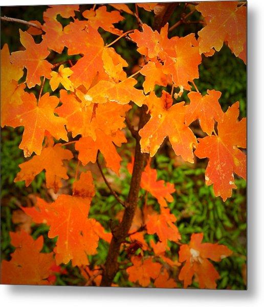 Robert Melvin - Fine Art Photography - Autumn Orange Metal Print