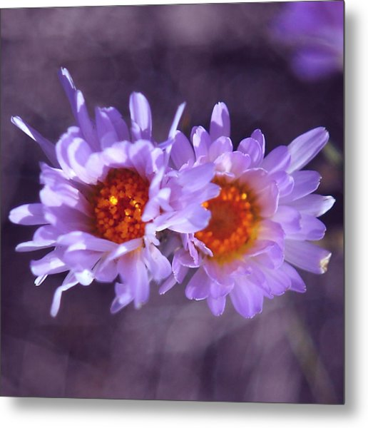 Robert Melvin - Fine Art Photography - Purple Morning Metal Print