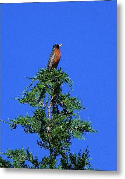 Robin Christmas Tree Topper Metal Print