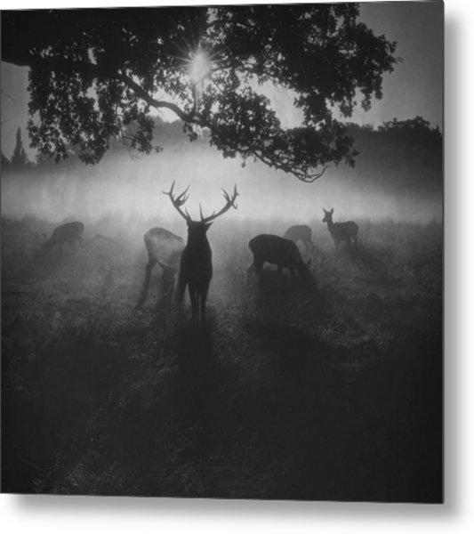 Robin Hood Woods Metal Print by Robert Fabrowski