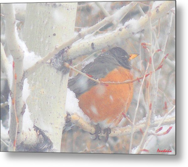 Robin In April Snow Metal Print