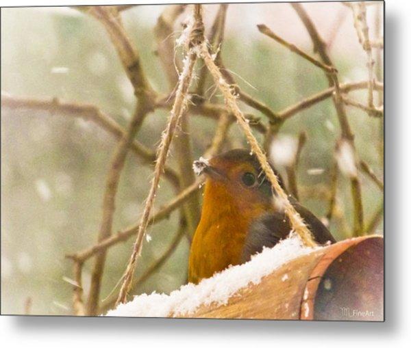 Robin In Winter Metal Print