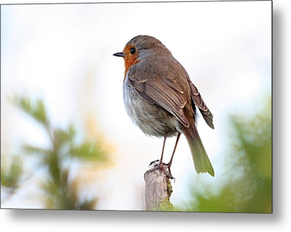 Robin On A Pole Metal Print