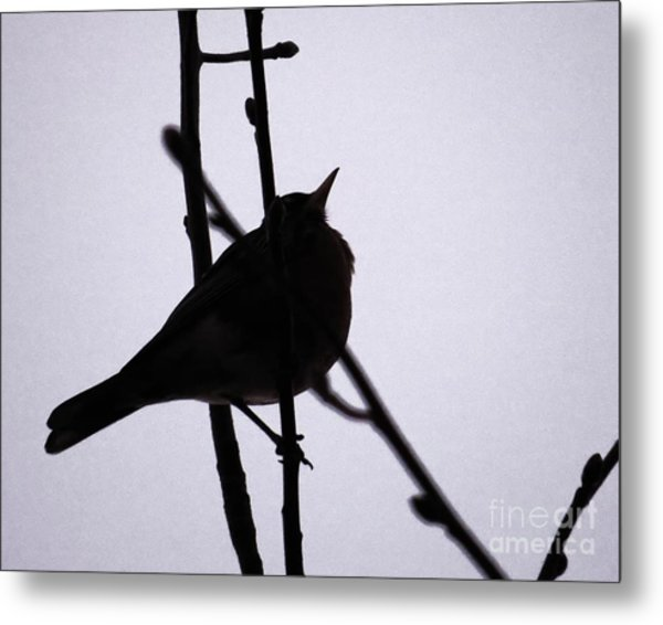 robin silhouette photograph by scott cameron