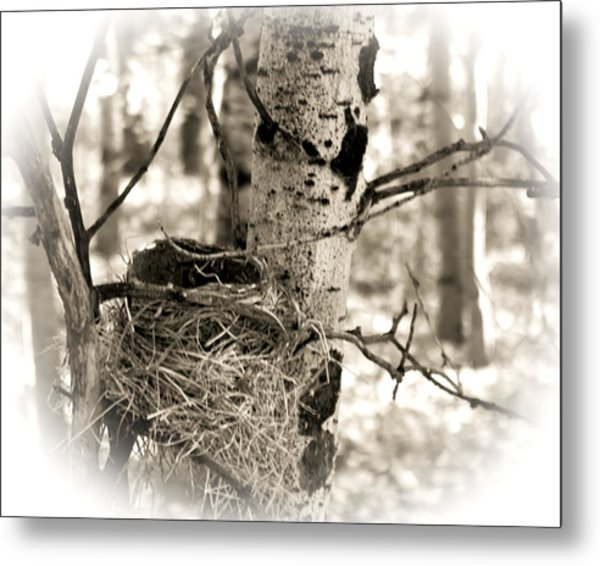 Metal Print featuring the photograph Robins Nest In The Aspens by William Havle