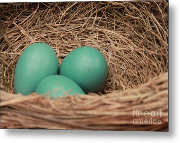 Robins Three Blue Eggs Metal Print