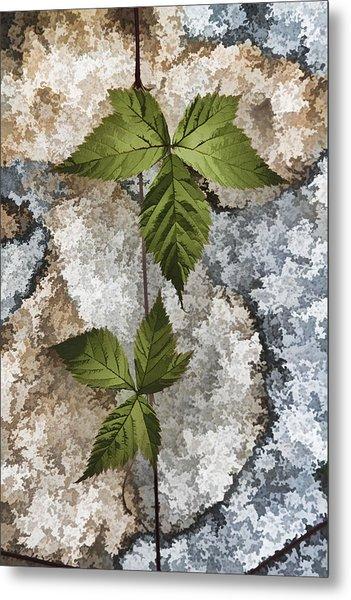 Rock And Vine Metal Print