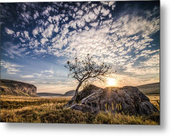 Rock Tree And Rising Sun Metal Print