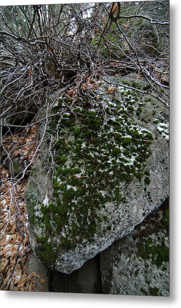 Rock With Lichen And Snow Metal Print