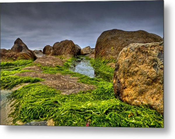 Rocks And Seaweed Metal Print