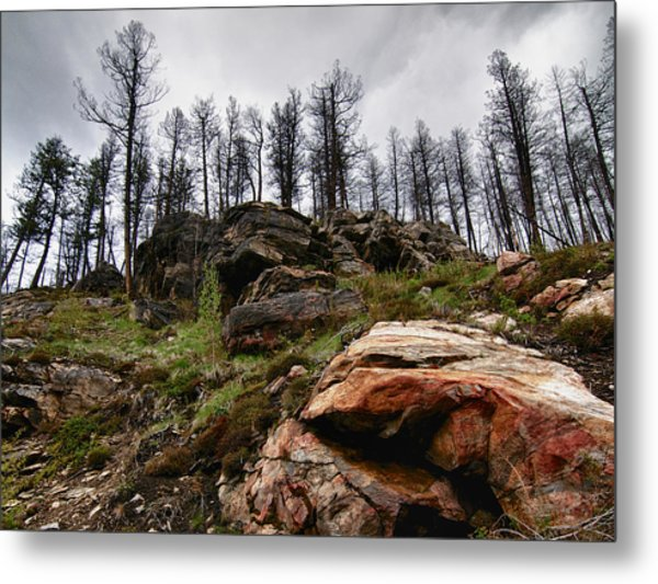 Rocks And Trees 2 Metal Print