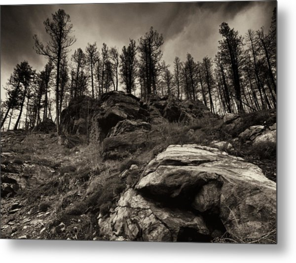 Rocks And Trees And Trees And Rocks Metal Print