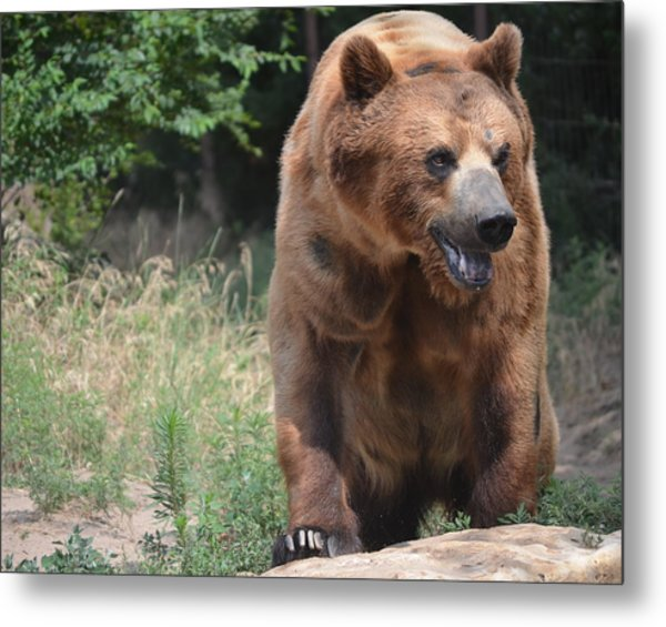 Rockstar Grizzly Metal Print