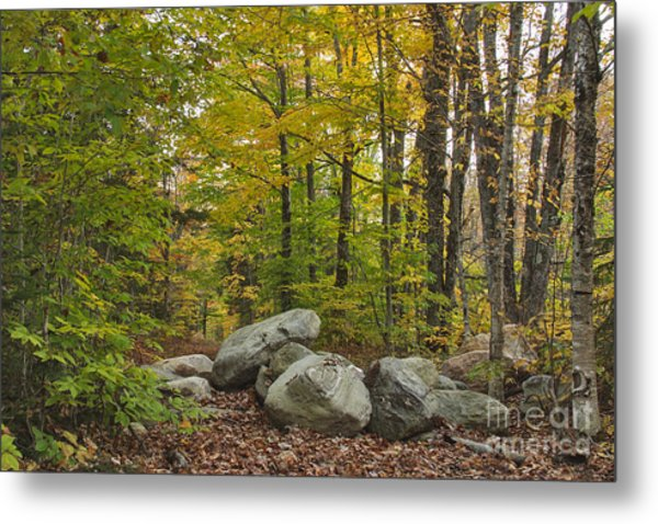 Rocky Forest Path Metal Print