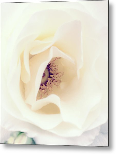Romance In A Rose Metal Print