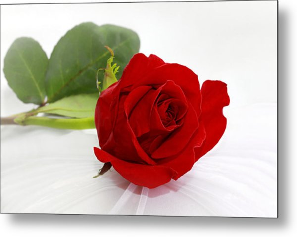 Romantic I Love You Red Rose Metal Print