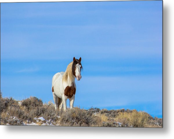 Romeo In Skyline Metal Print