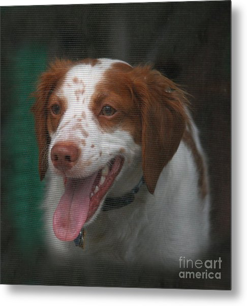 Rooney At The Back Door Metal Print