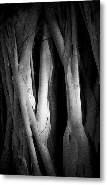 Roots Metal Print by Nancy Edwards
