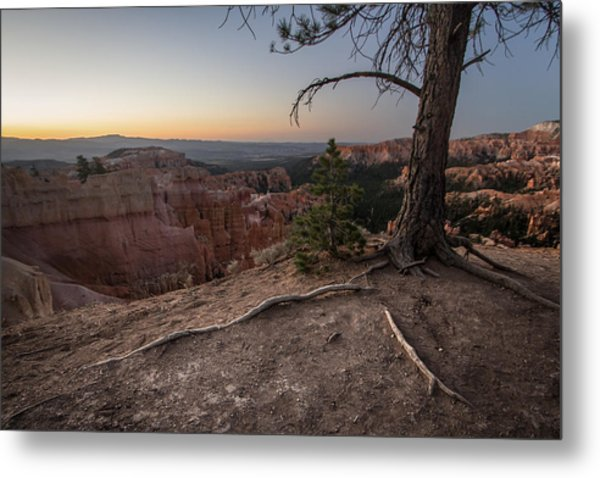 Roots On The Rim 1 Metal Print