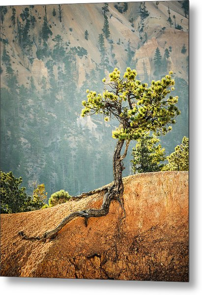 Roots Rock Metal Print by Nancy Strahinic