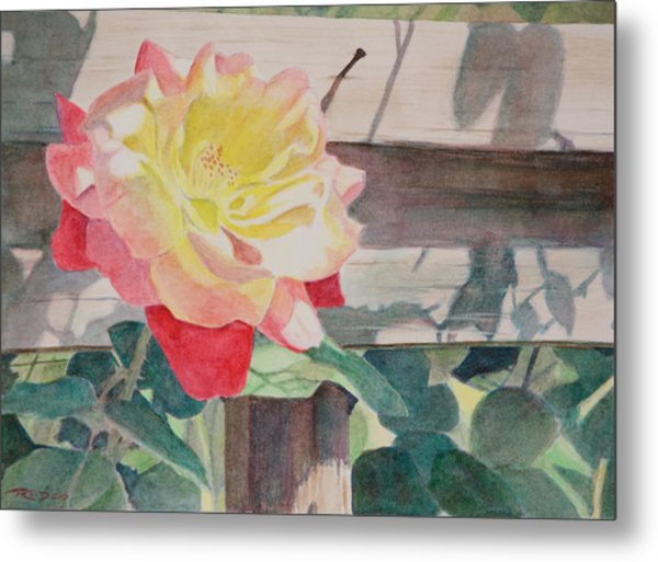 Rose Aglow Metal Print
