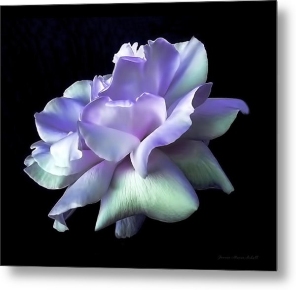 Rose Awakening Floral Metal Print