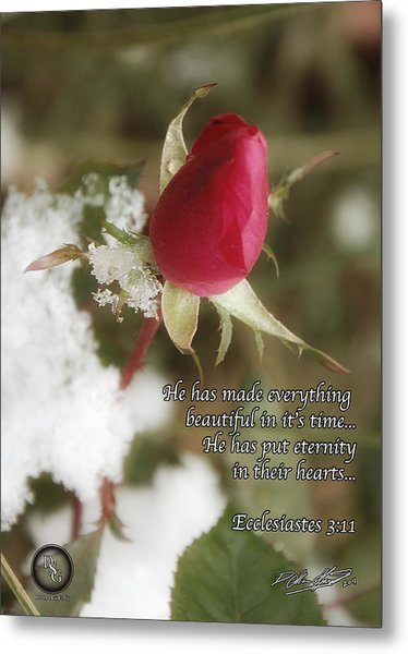 Rose Bud In Snow Metal Print