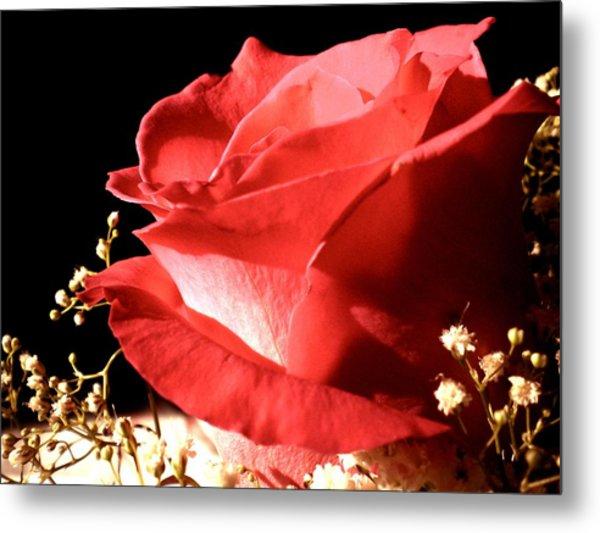 Rose Metal Print by Elizabeth Fredette