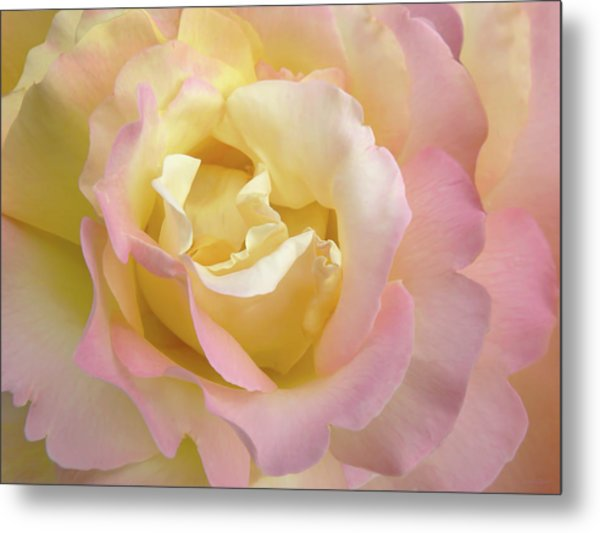 Rose Flower Parfait Metal Print