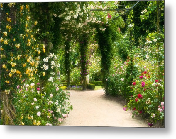 Rose Garden At Alnwick Metal Print