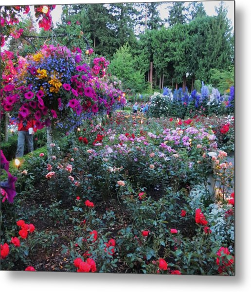 Rose Gardens 2 Metal Print