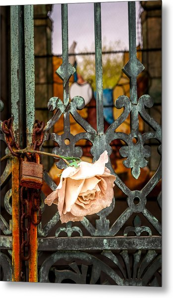 Rose In Remembrance Metal Print