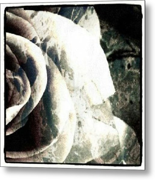 Rose In Retro Metal Print