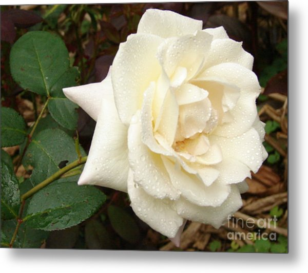 Rose In The Rain Metal Print