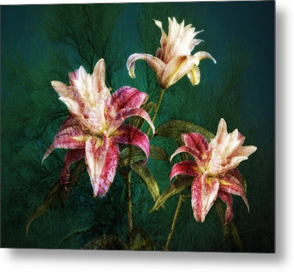 Metal Print featuring the photograph Rose Lily Number Three by Bob Coates
