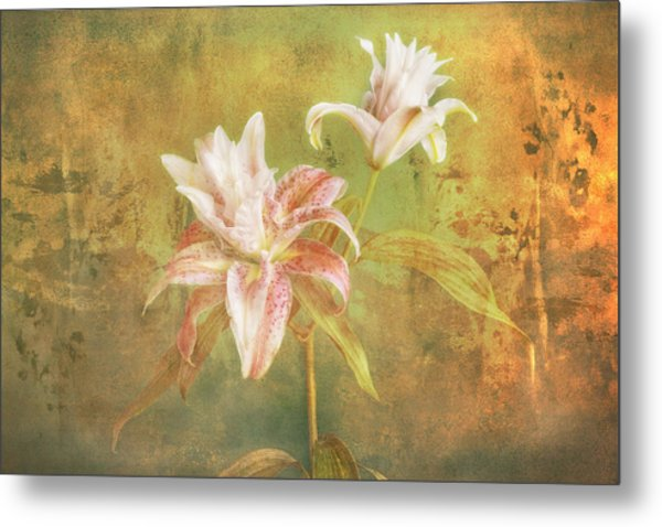Metal Print featuring the photograph Rose Lily Silk by Bob Coates